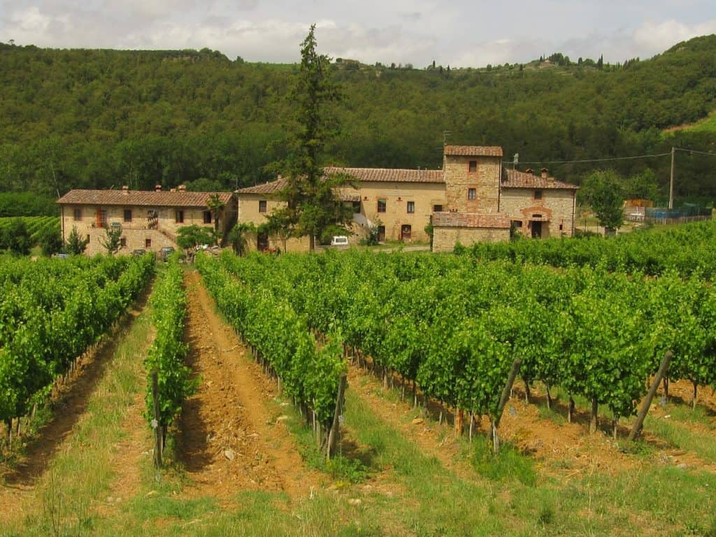 Vineyard of Chianti, tipical landascape of this area which is famous for wine and olive oil.